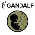 Polter i Gandalf rozpoczynają współpracę